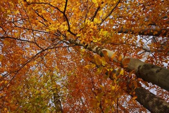 Longwood Gardens, Pennsylvania, U.S.A.